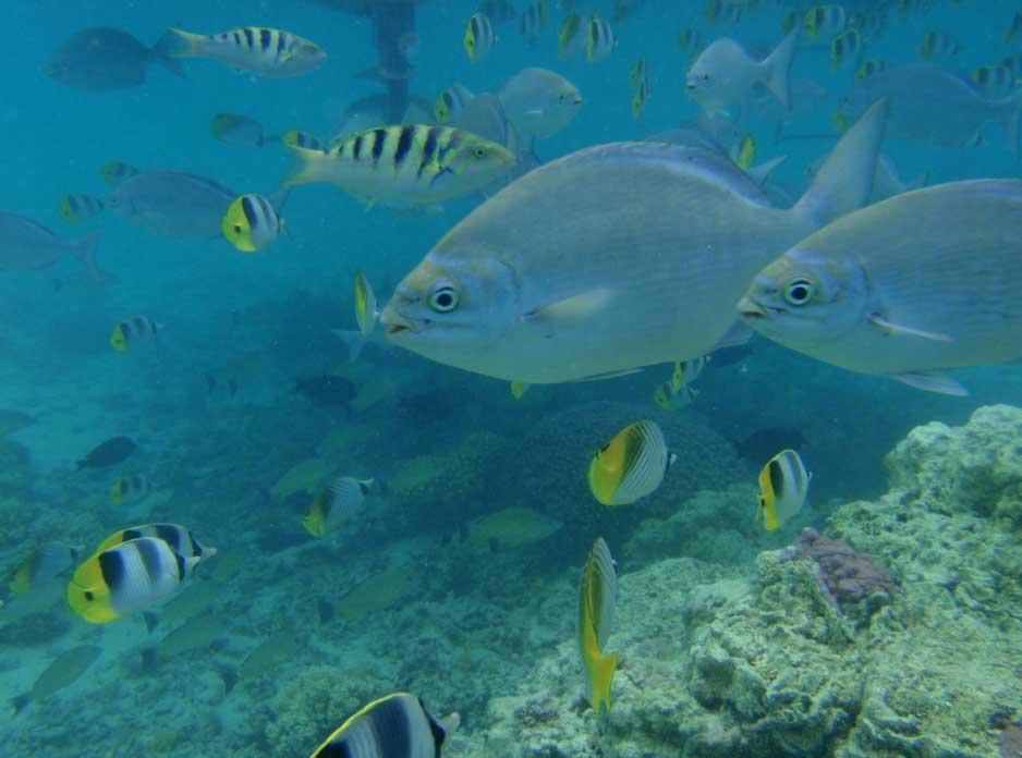 Aitutaki Snorkeling Tours